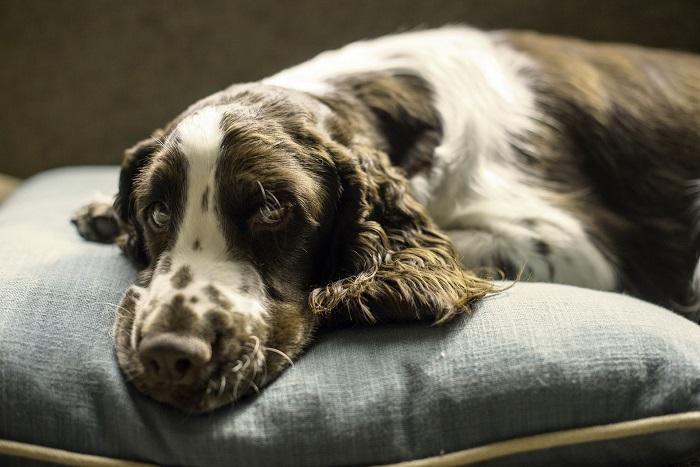 Matrac pre psa pre pohodlný oddych